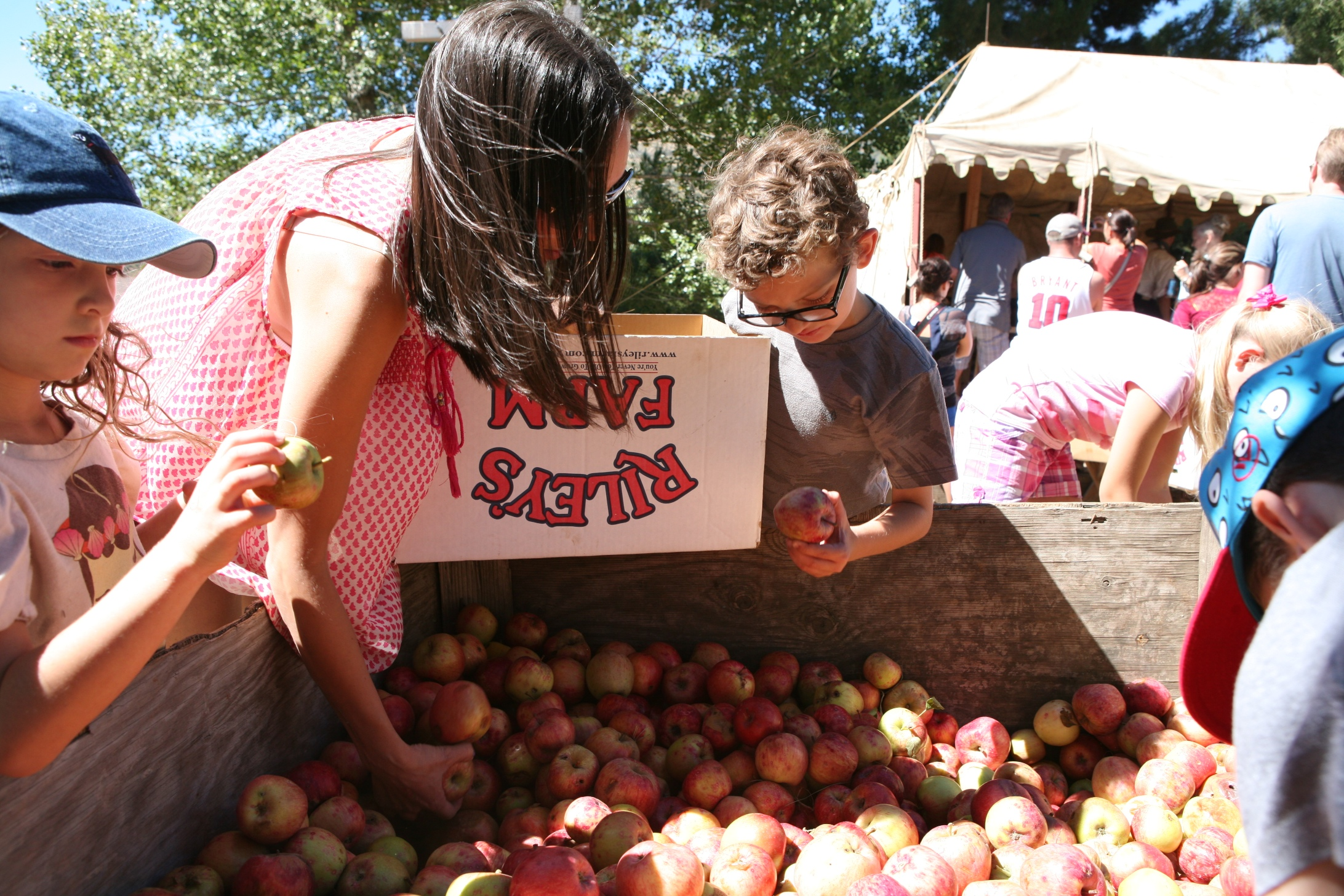 rileys farm apples.jpg