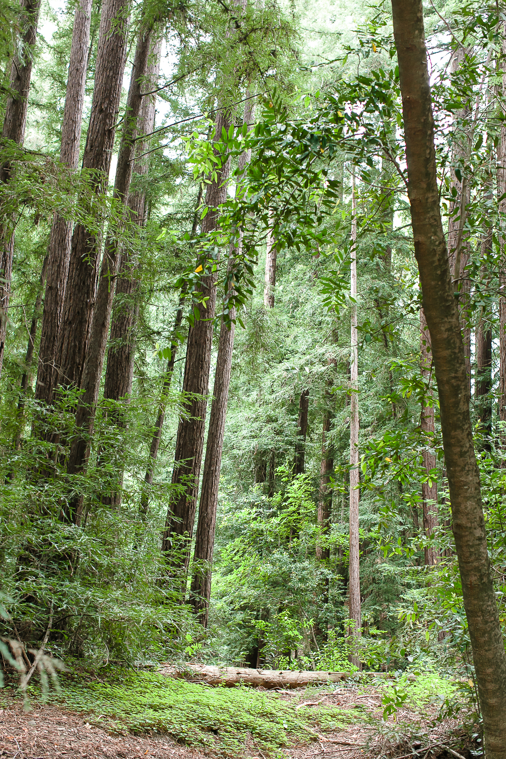 pfeiffer big sure state park, camping, redwoods, tent, chris holt photography, los angeles wedding photographer