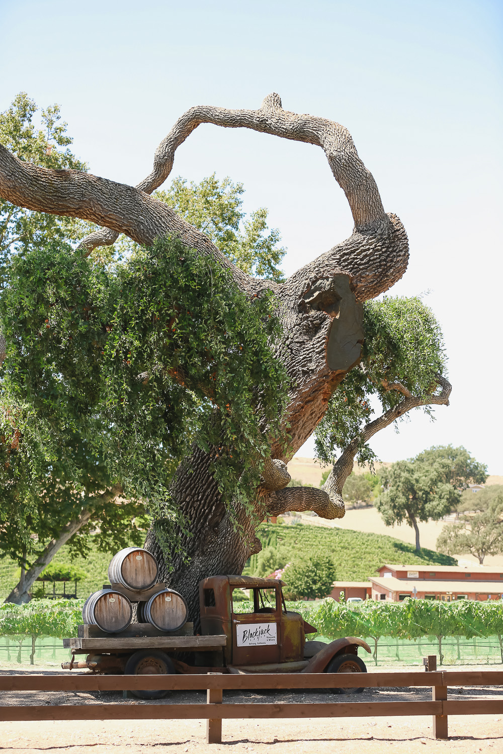 Blackjack Winery, Los Olivos