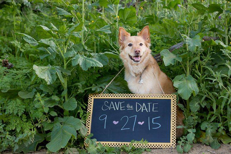 save-the-date-with-dog.jpg