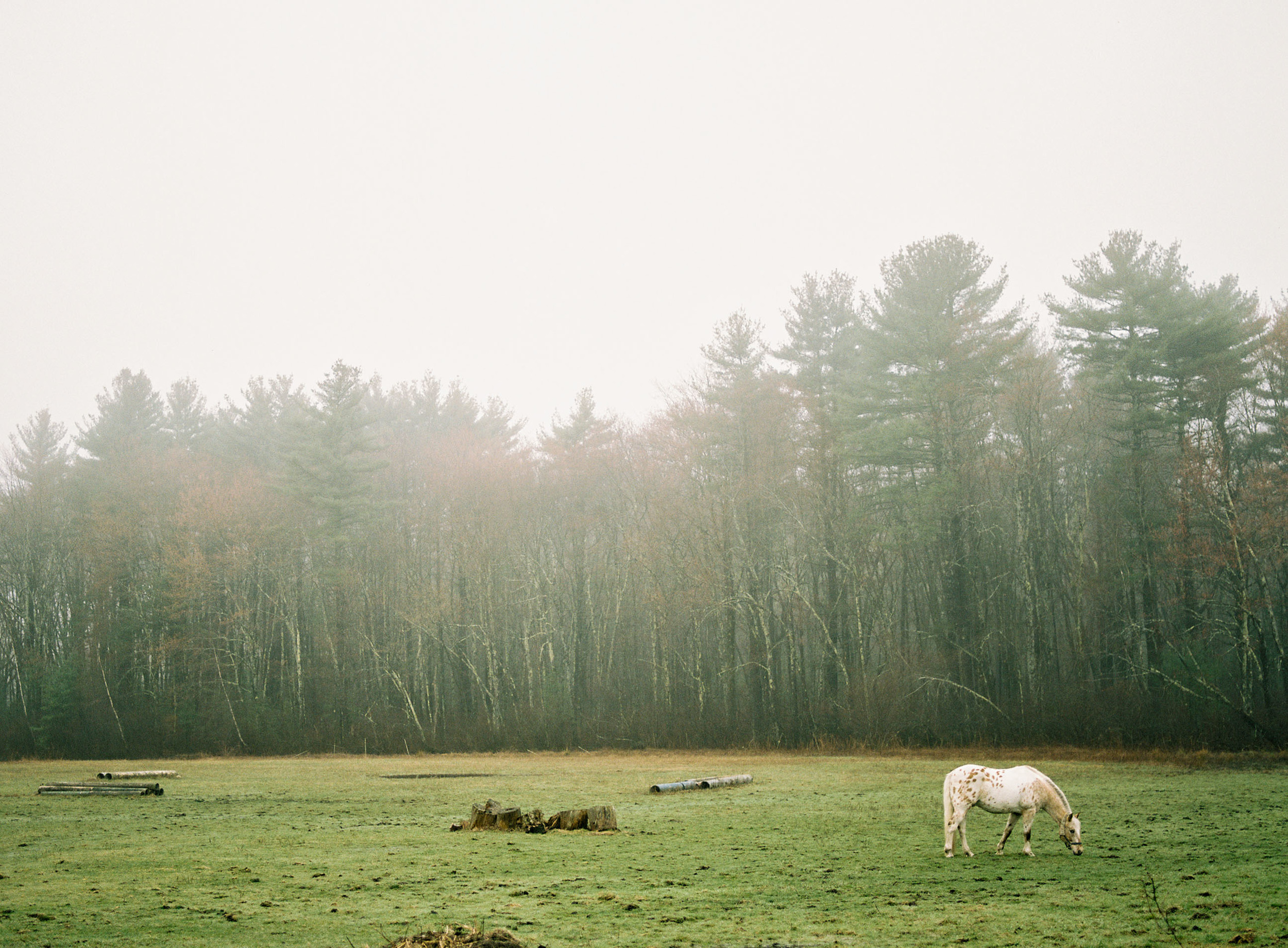 Film_horse-01.jpg
