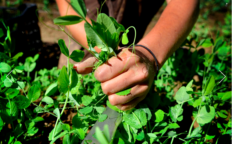 hands and seedling.JPG
