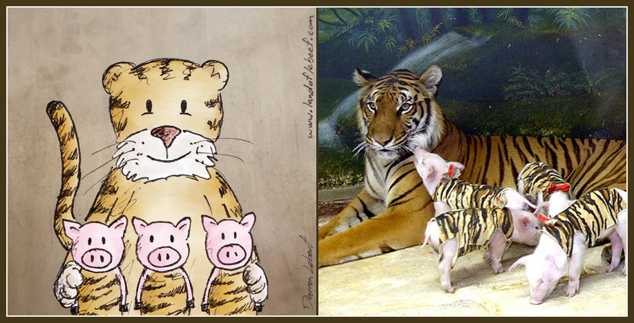 Unlikely animal best friends - piglets and tiger. The Land of Le Beef comic strip, by Darren Lebeuf