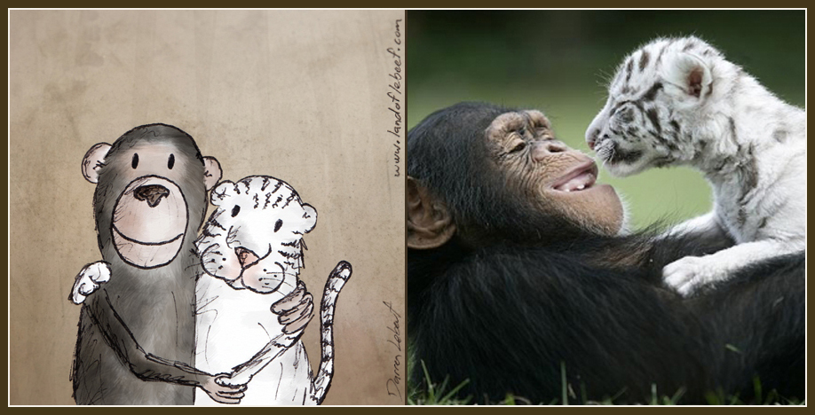 Unlikely animal best friends - chimpanzee and white tiger. The Land of Le Beef comic strip, by Darren Lebeuf