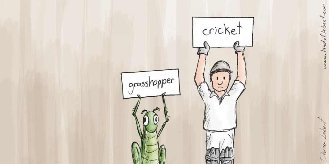 1505-19_Cricket.jpg