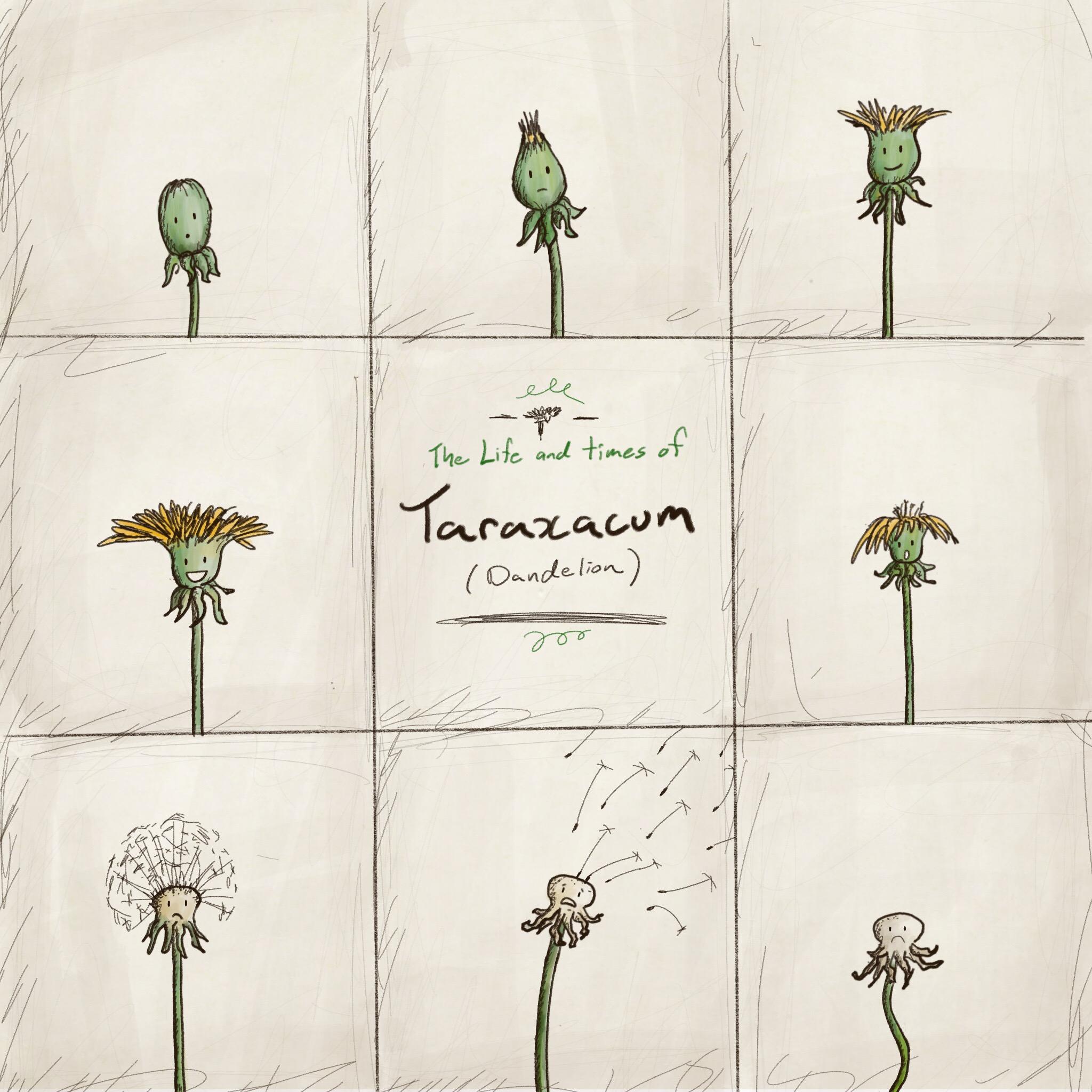 Week 7: Botanical
