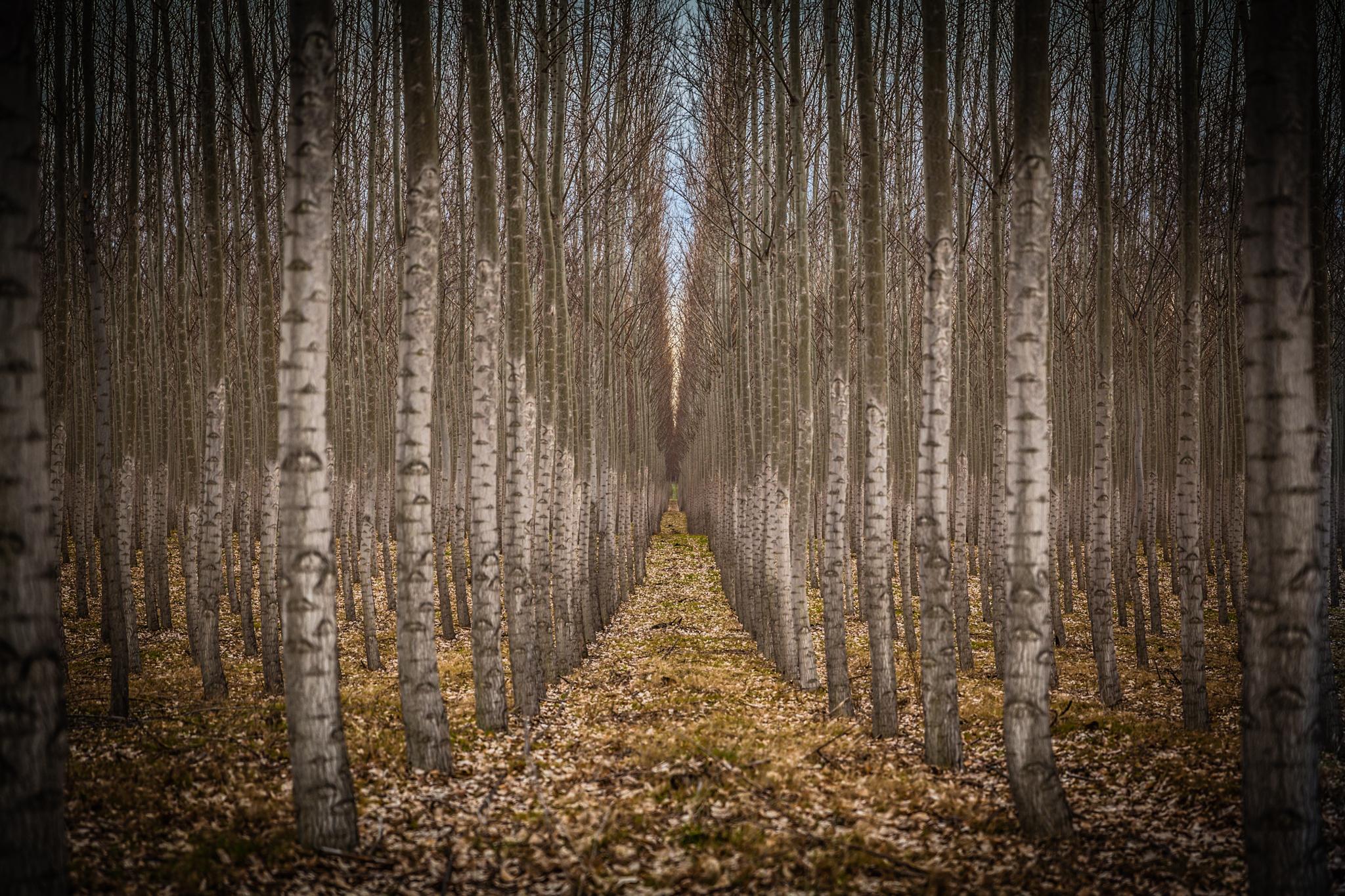 Hall of Birch Fall.jpg