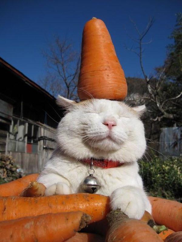 carrot_cat.jpg