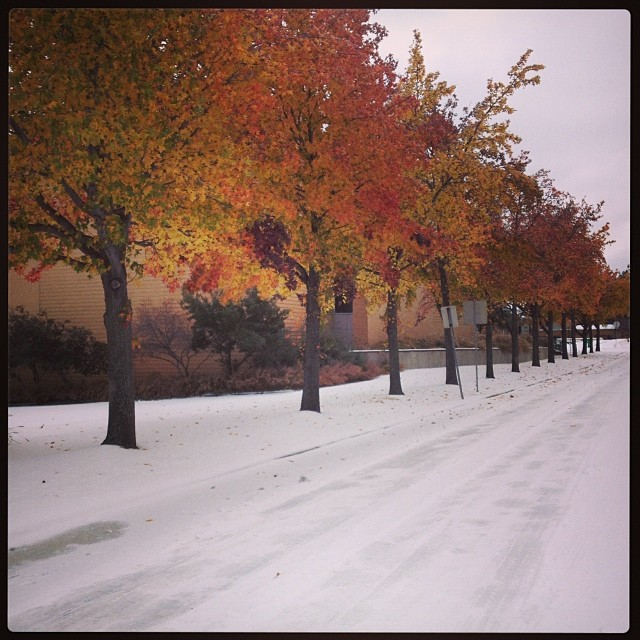UNT without the cars and streets is apparently beautiful in the fall/winter, too. Photo by  Naomi Wood .