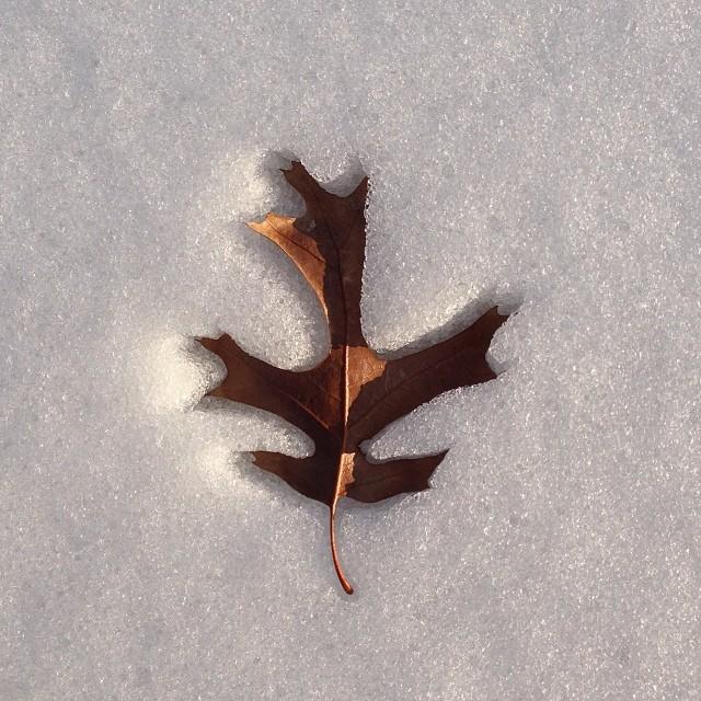 Leaf art. Photo by  @drcruz32.