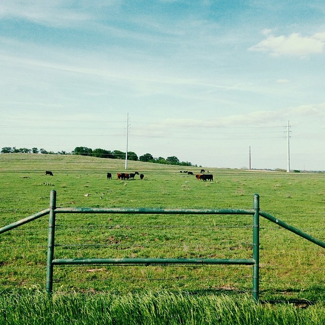 Springtime makes the cows look prettier.  Photo by Paige Gibson.