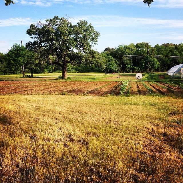 KDB + Cardo's Farm = a match made in heaven. Photo by @ kessalynweeman .