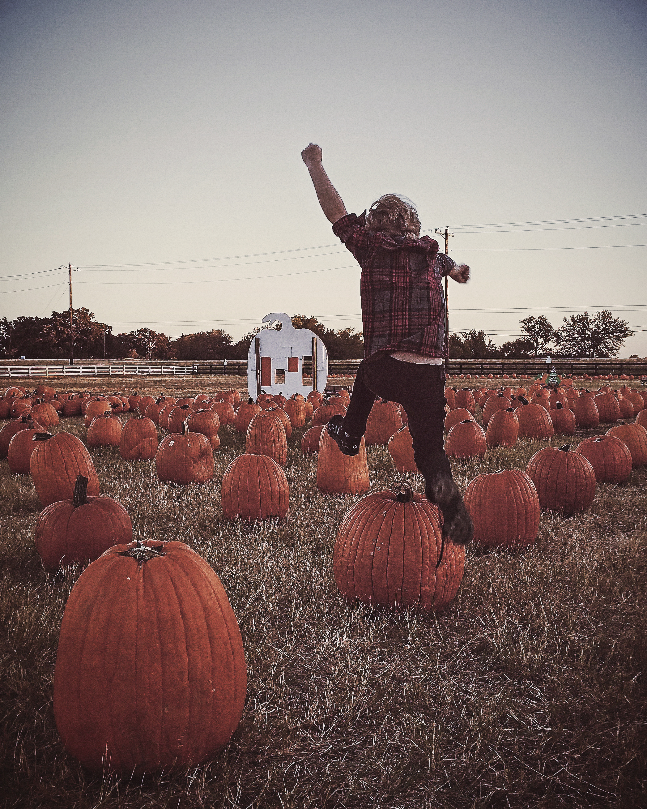 Have y'all ever checked out the gigantic pumpkin patch (complete with hay maze, obstacle courses and much more) on Cross Timbers Rd. in Flower Mound? It's awesome and you only have to pay $5 to park for as much fun as you can take in for a day.