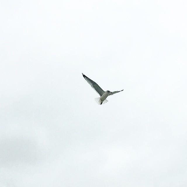 @IanHarber and a bird series.