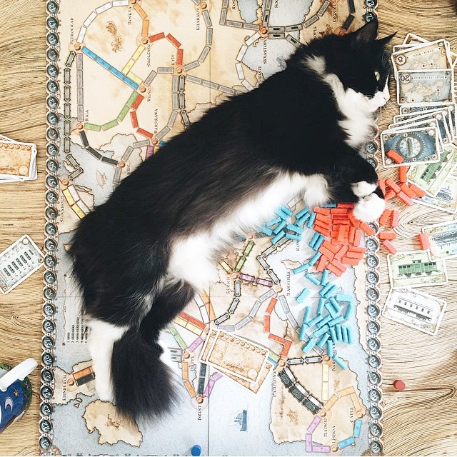 Sometimes the cat can win more than just tic tac toe.