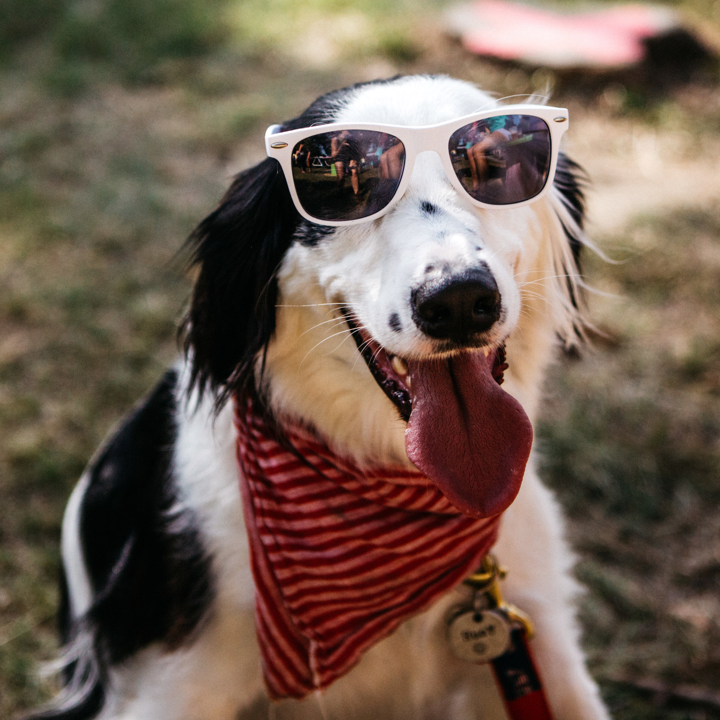A super cool dog. Photo by  Erin Summerlin .
