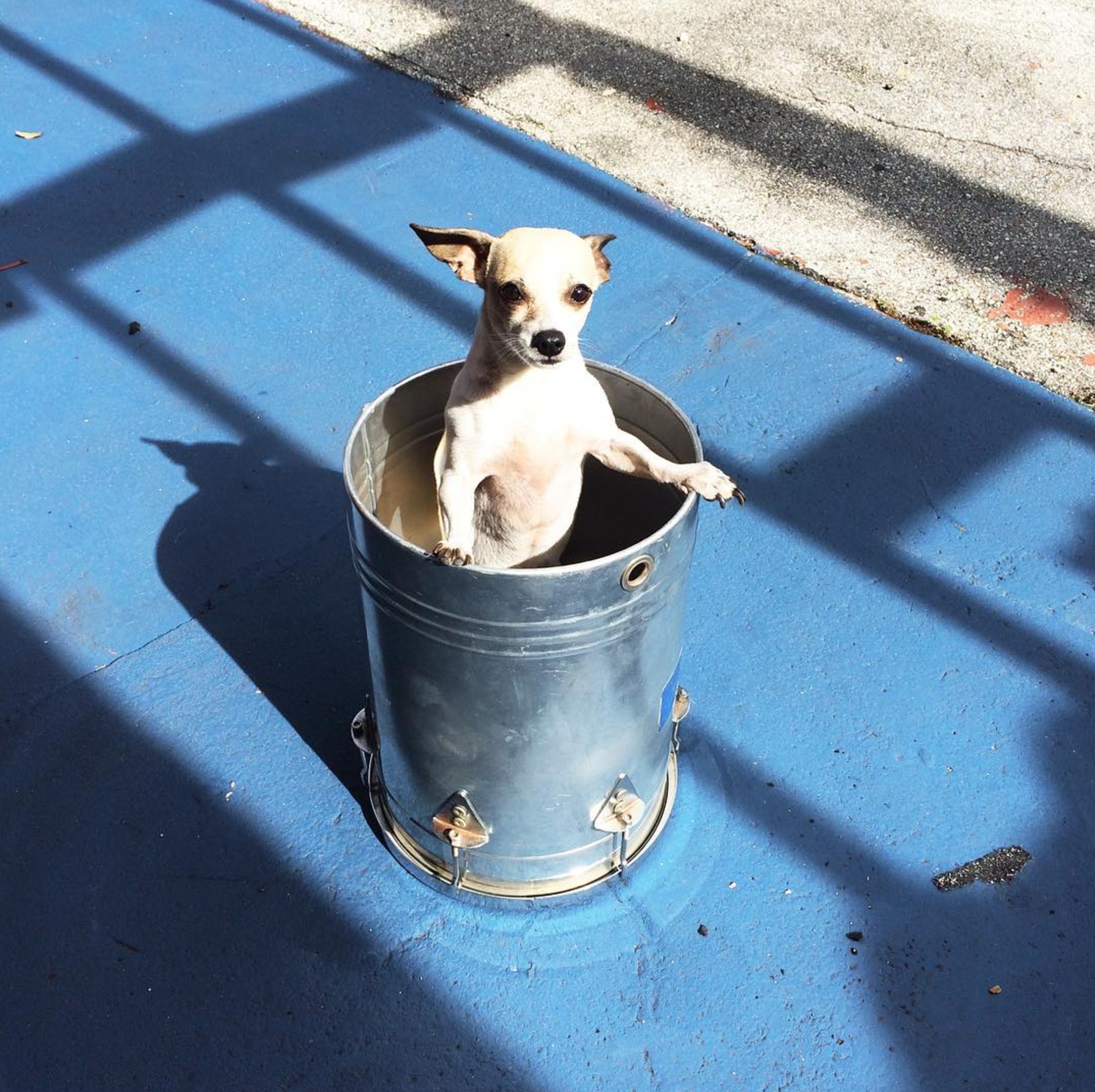 @nikareally and a dog in a bucket.