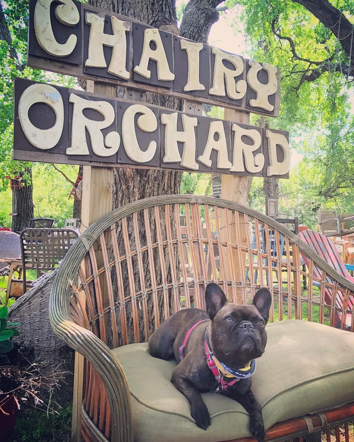 Mona at The Chairy Orchard. Photo by @theryancole87.