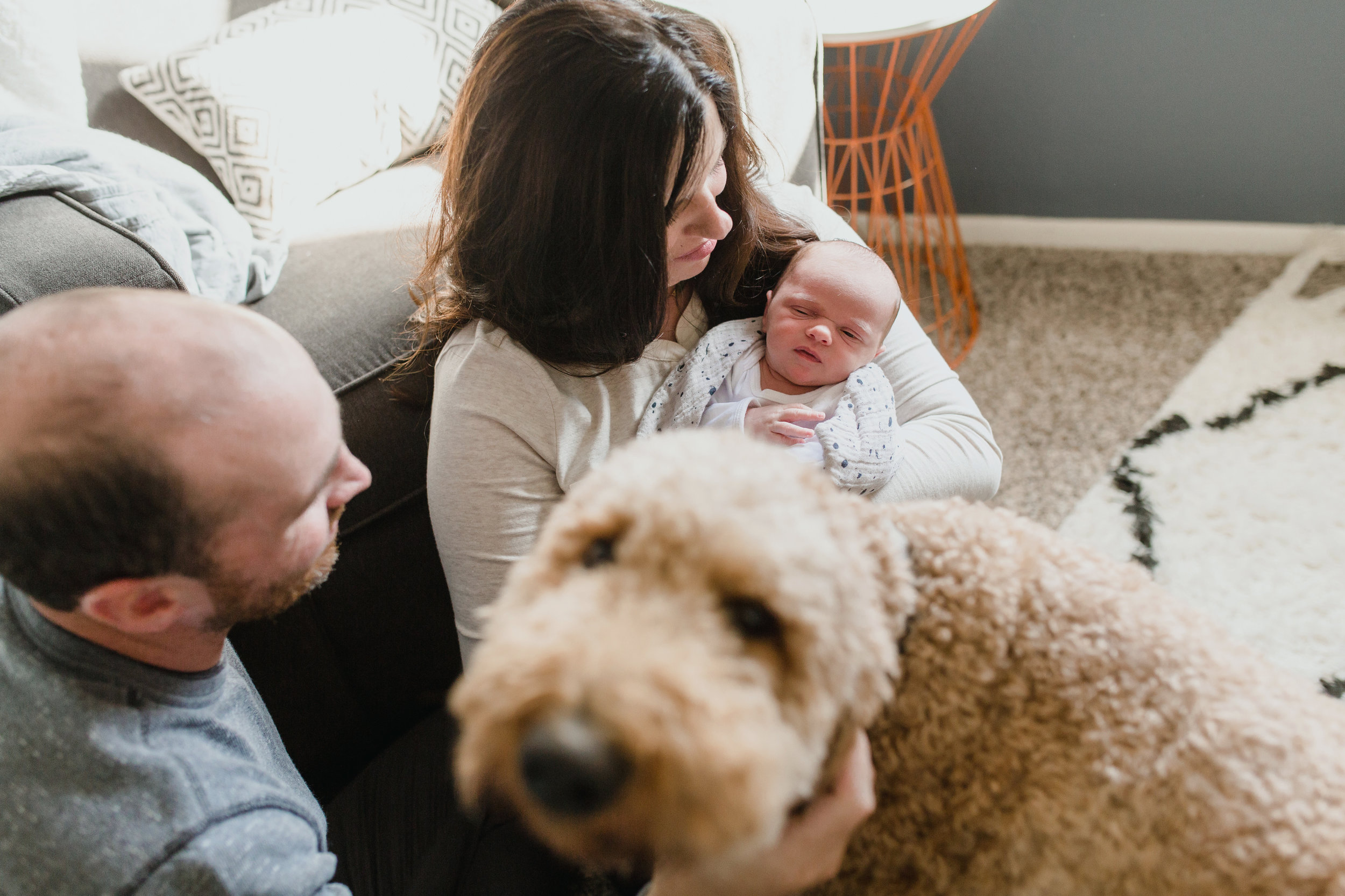 Fur_Babies_Lifestyle_Photography_Family_Newborn_Pets.JPG