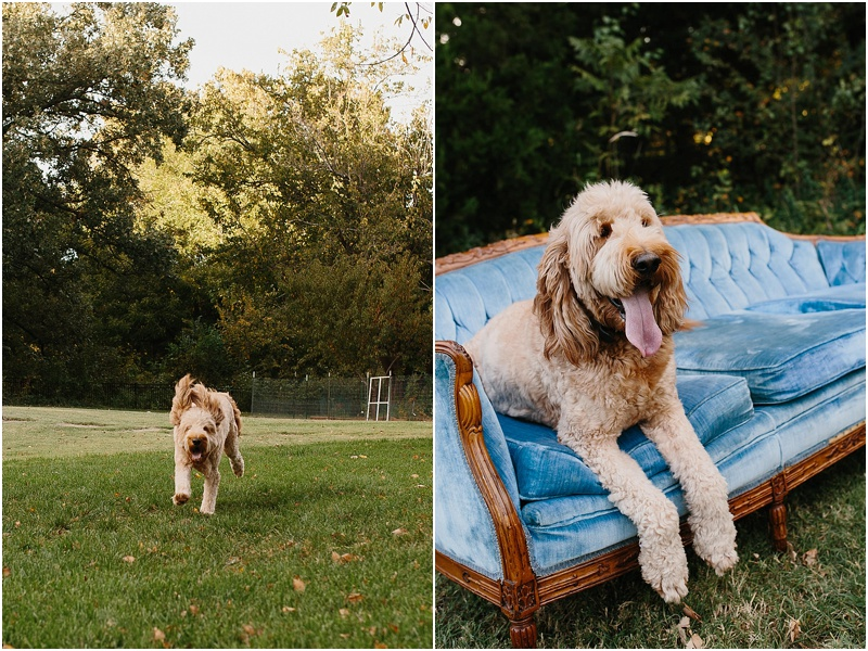goldendoodle_dog_photography_family_outside_OKC.jpg