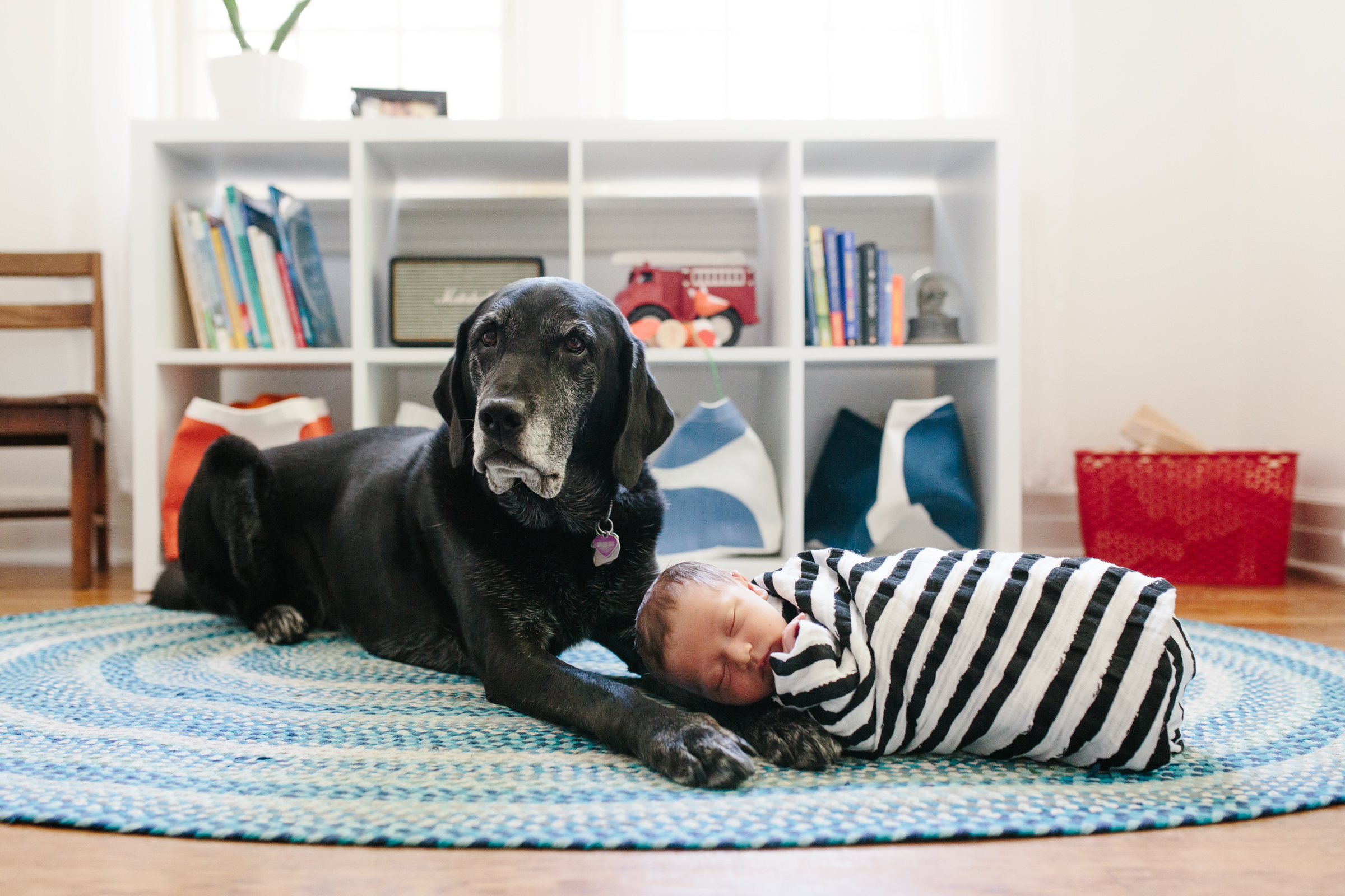 newborn_photography_labrador_dog_nursery_inspiration_lifestyle_OKC.JPG