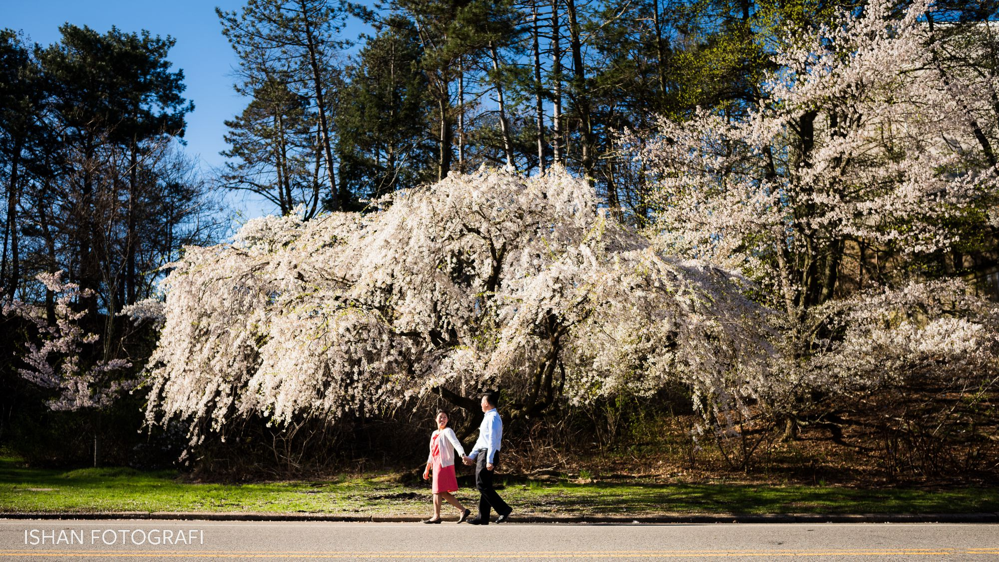 cherry-blossoms-engagement-photos-branch-brook-park-new-jersey