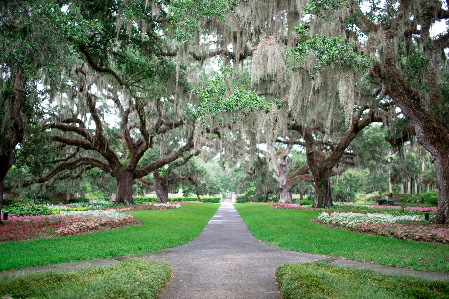 The spectacular Live Oak Allée.