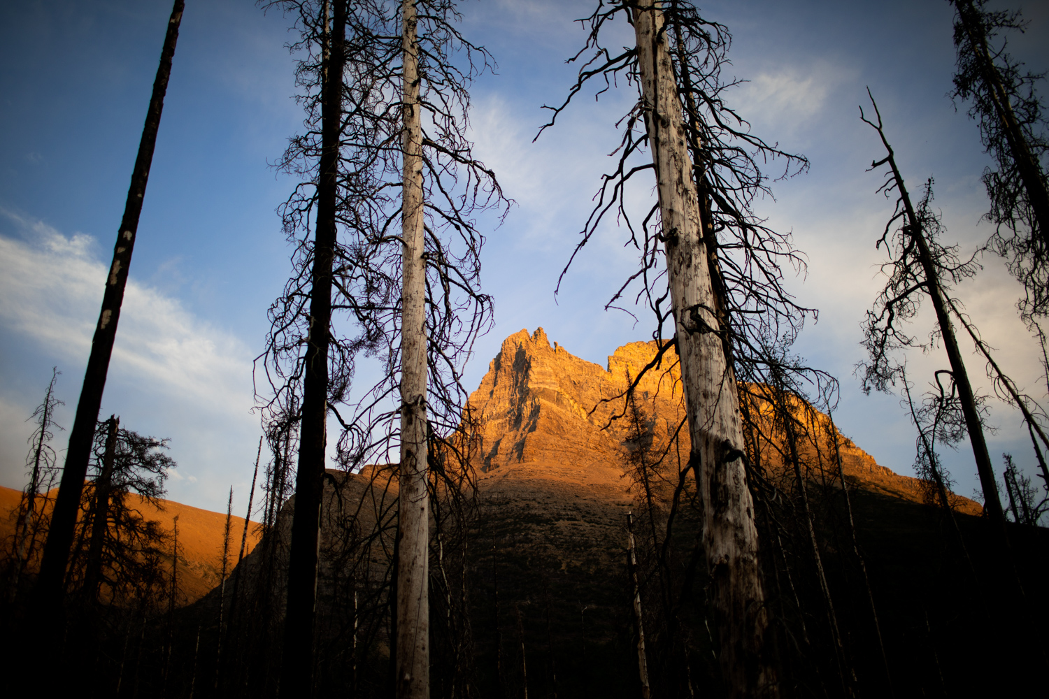 Golden light. Trees are charred from a fire that burned through this section of Glacier National Park in 2015.