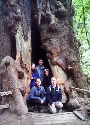 YA-Redwood.jpg