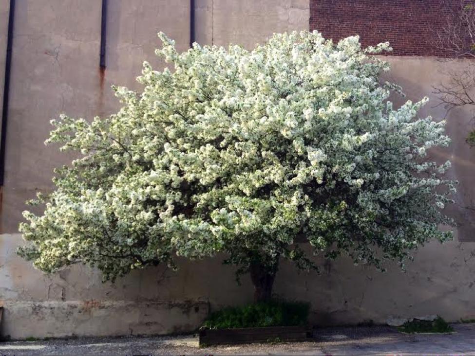 YA-May-flowerw