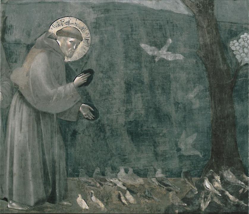 YA-St-Francis