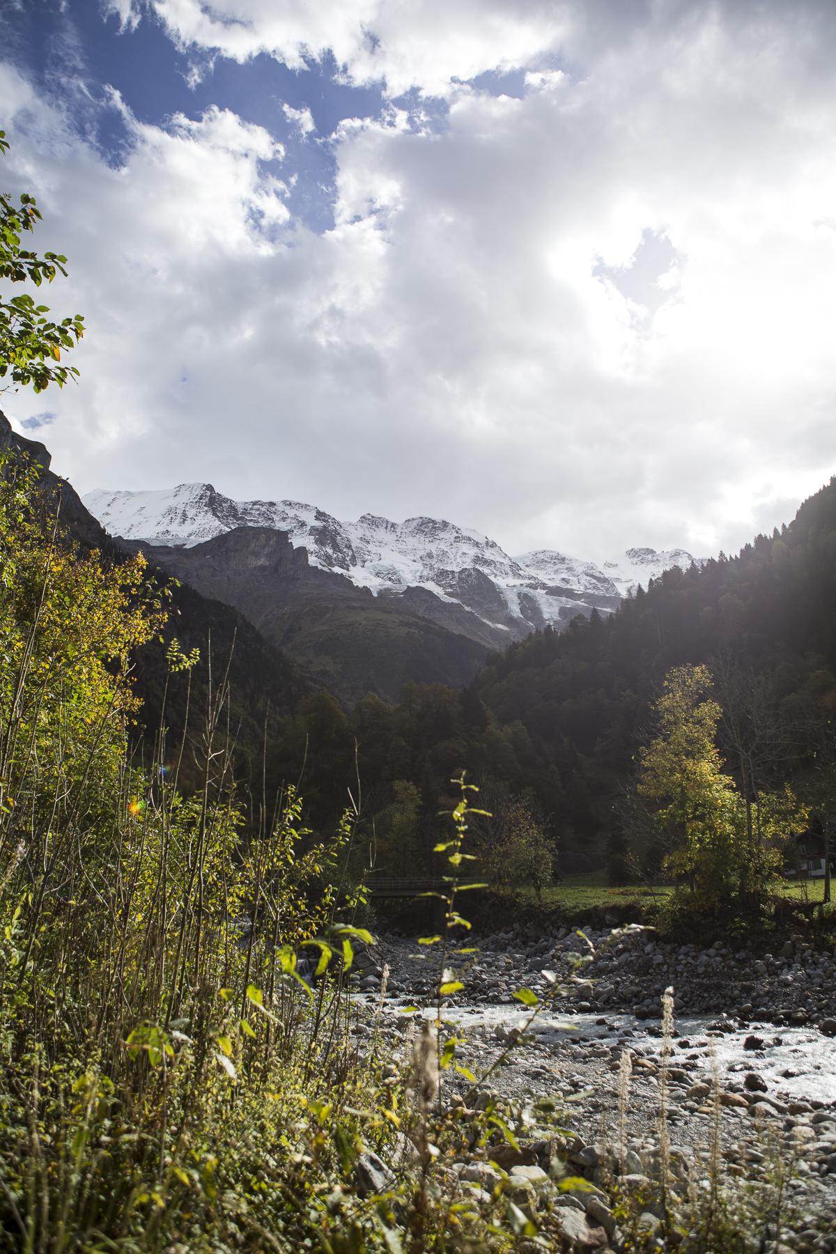 MountainsAndCows-1.jpg