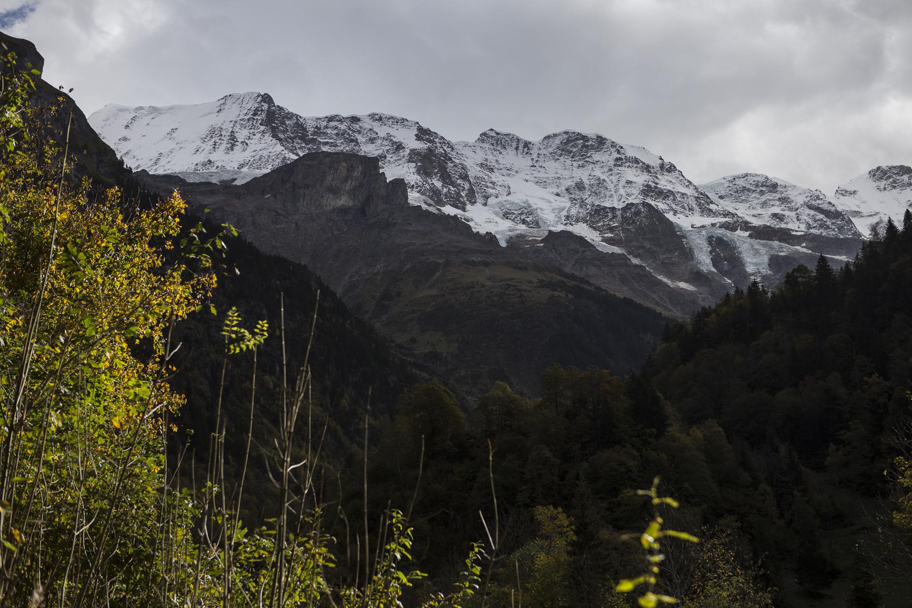MountainsAndCows-2.jpg