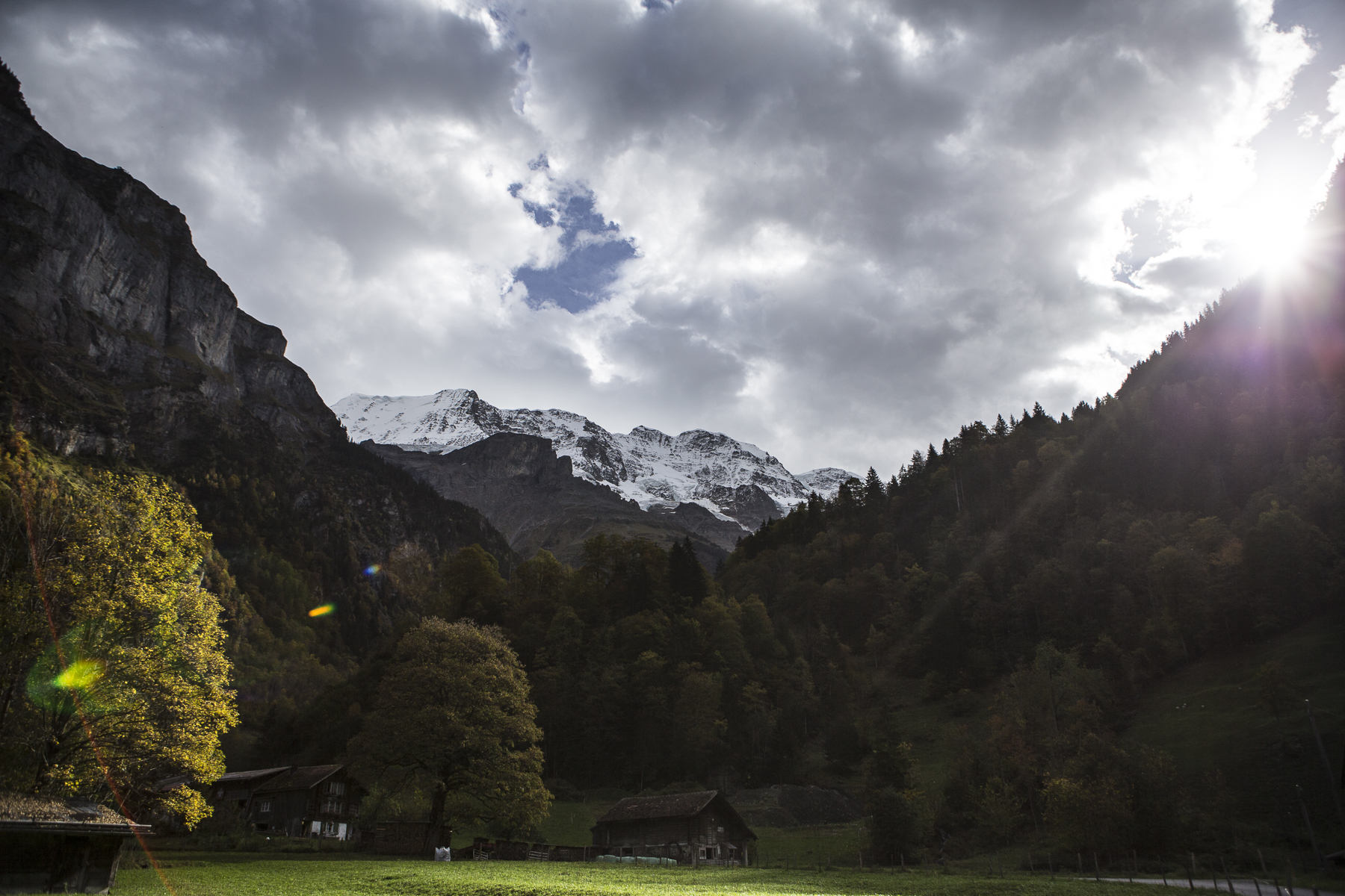 MountainsAndCows-7.jpg