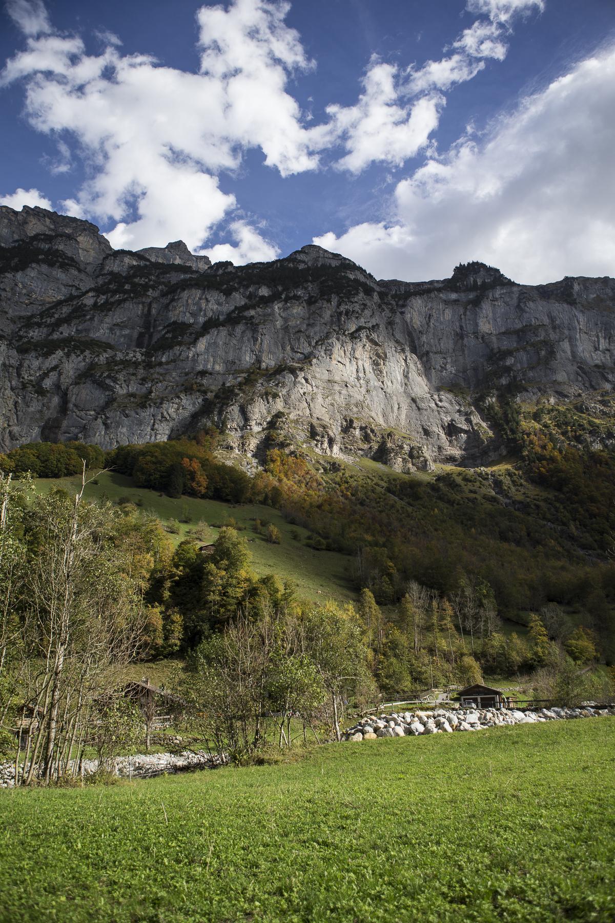 MountainsAndCows-8.jpg