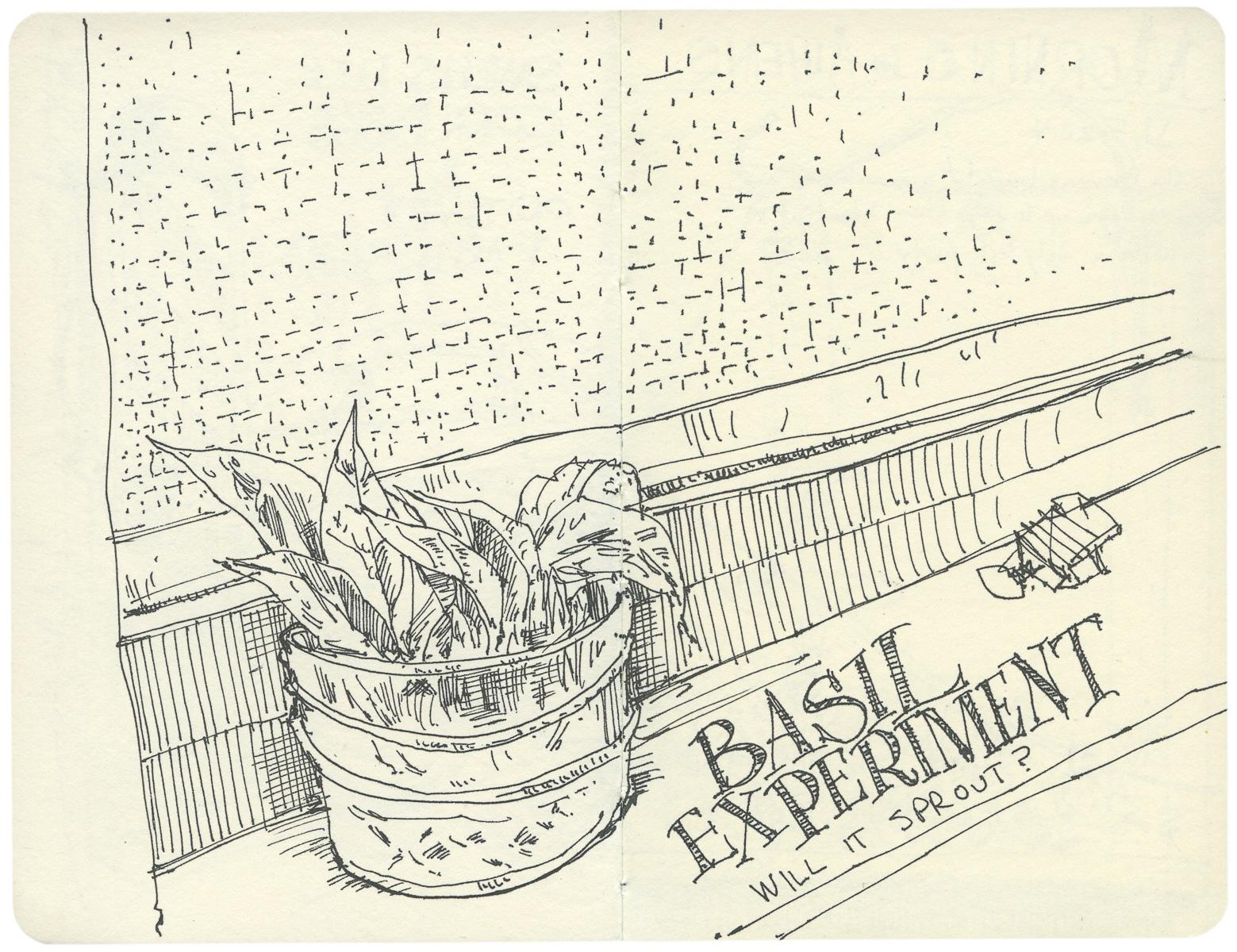 Windowsill Basil