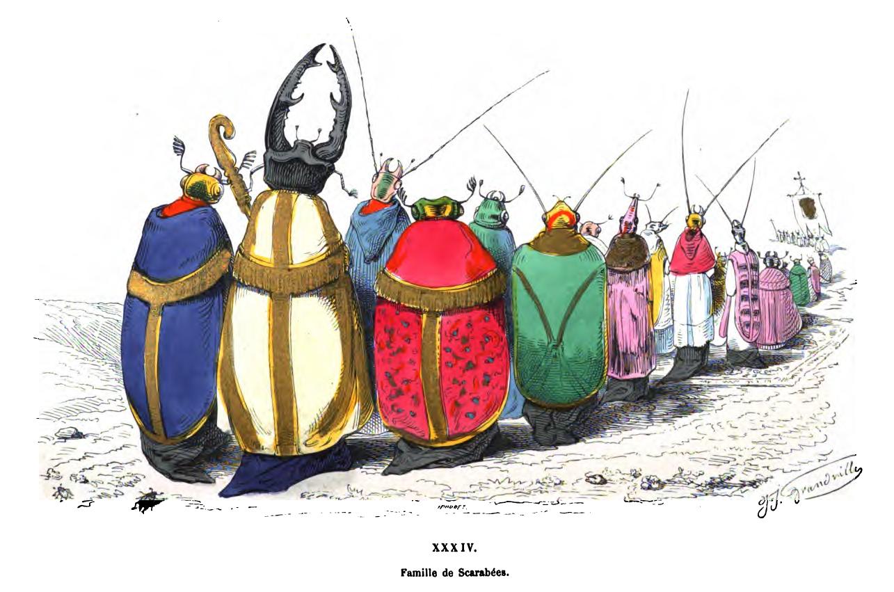 Famille de Scarabées (Family of Beetles) by J.J. Grandville from Le Metamorphoses du Jour.  PD source:  Wikimedia Commons