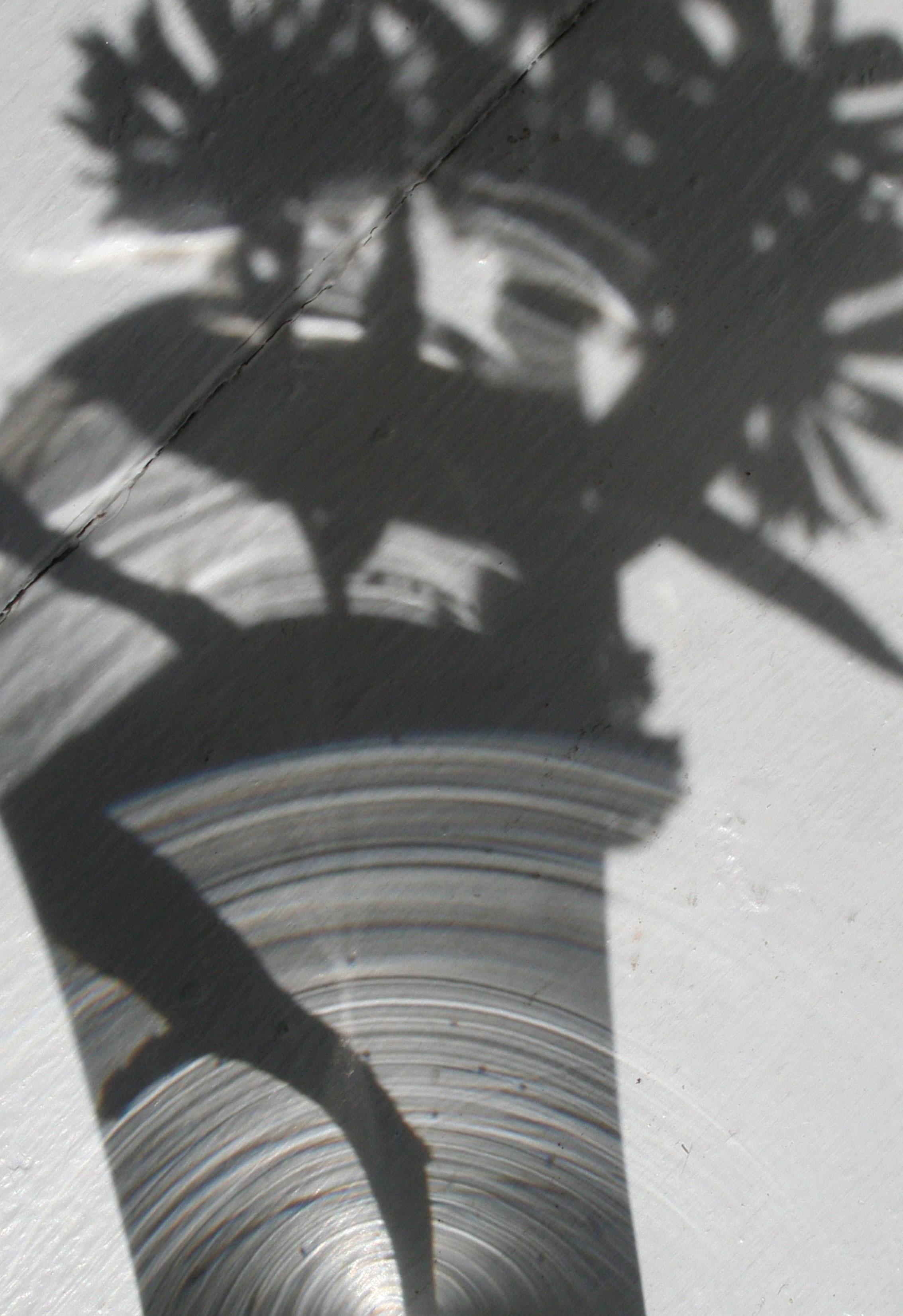 SharpShadows.jpg