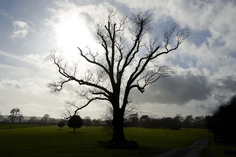 Winter Tree - County Cork