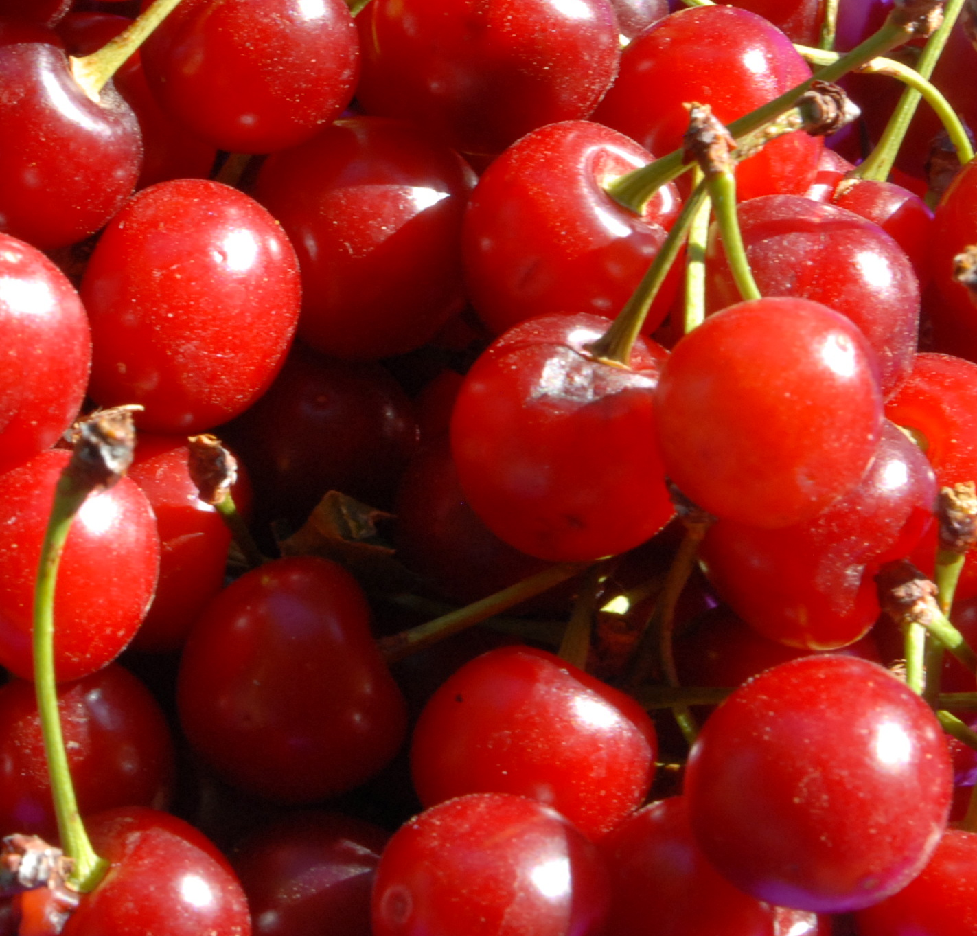 Cherries for Cherry Sauce