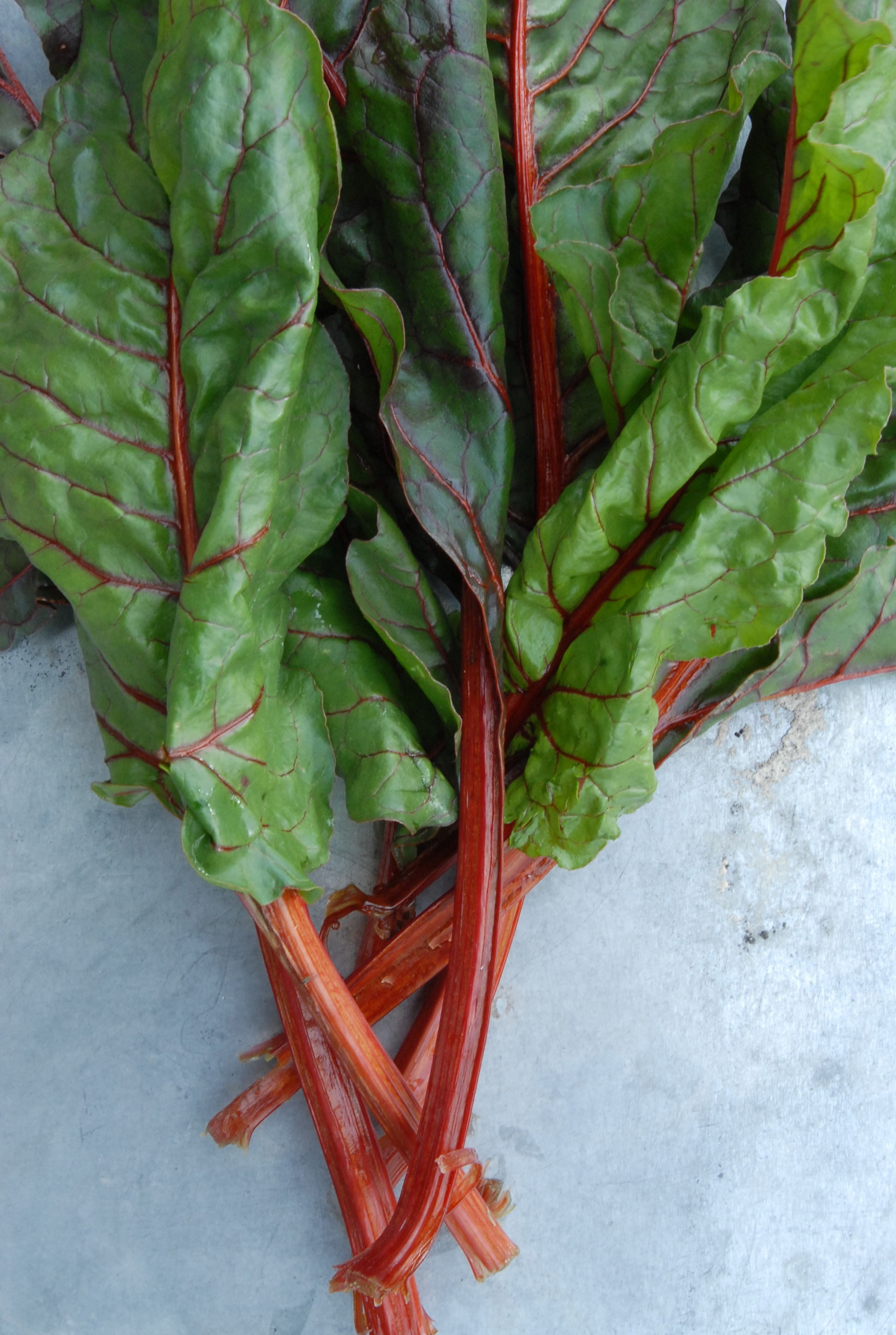 Chard in March from Mananica Farm
