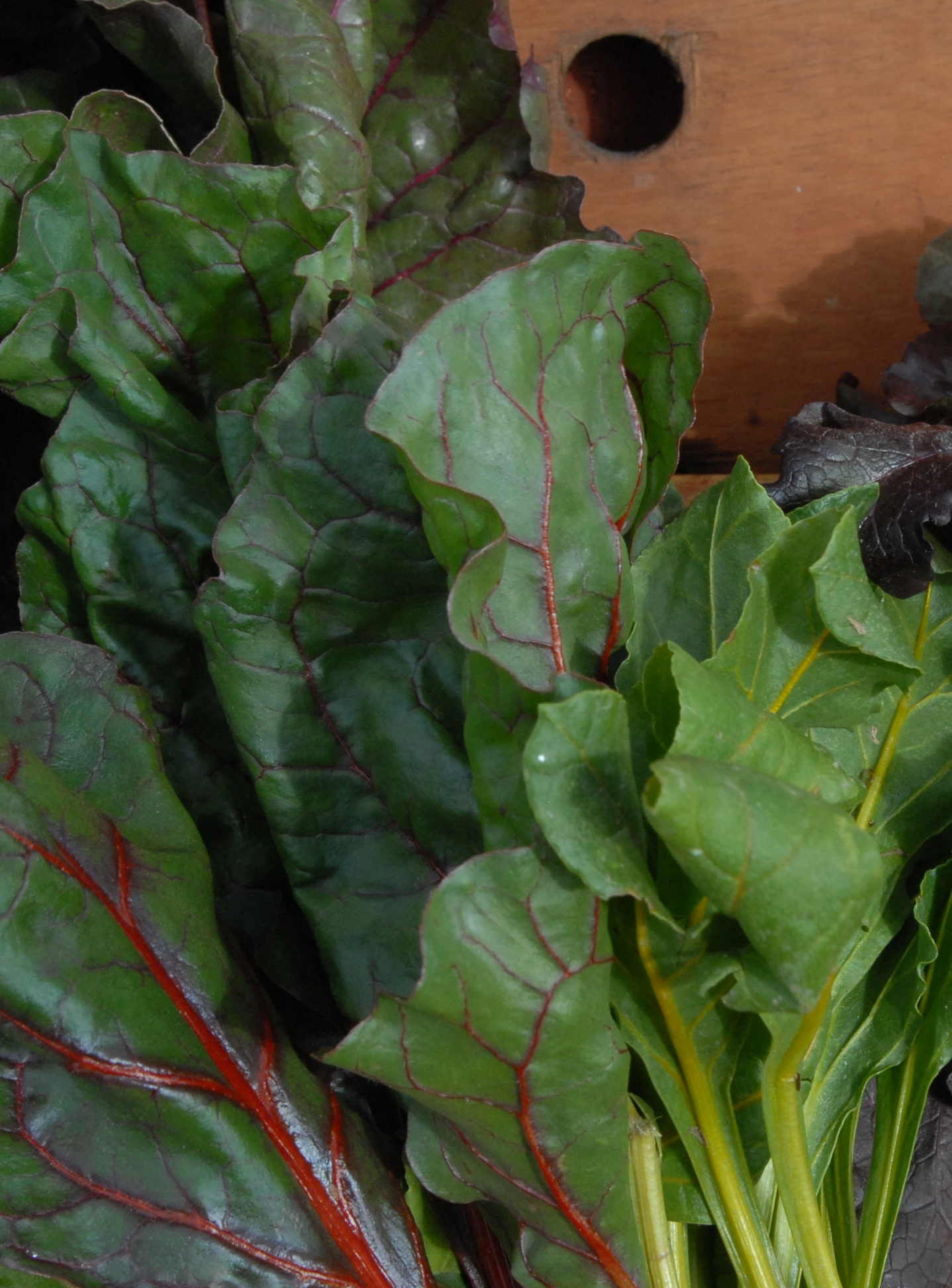 Winter rainbow chard