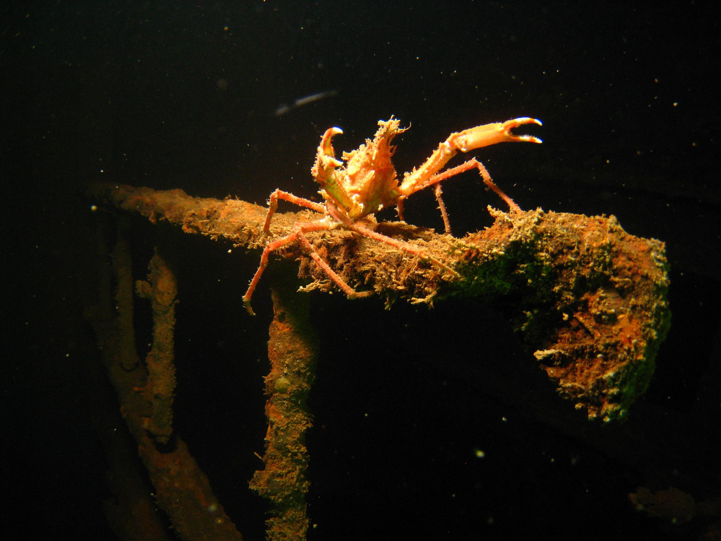 crab.ladder.jpg