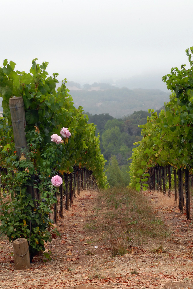 CH 077_2522 Roses and Vines.jpg