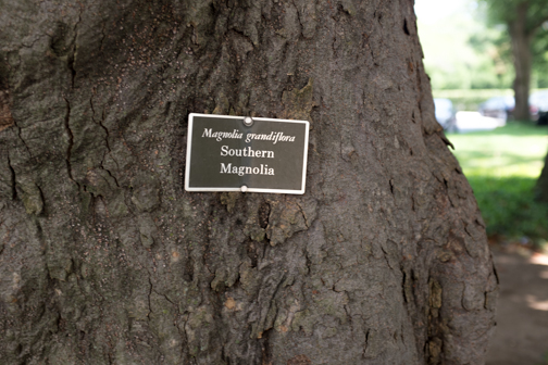 Sitting in the shade of a sweet Southern Magnolia