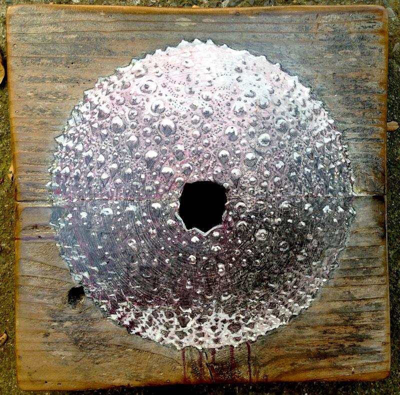 charlie-callahan-urchin-on-redwood.jpg