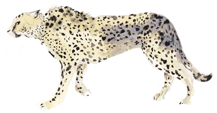 3_cheetah440.jpg
