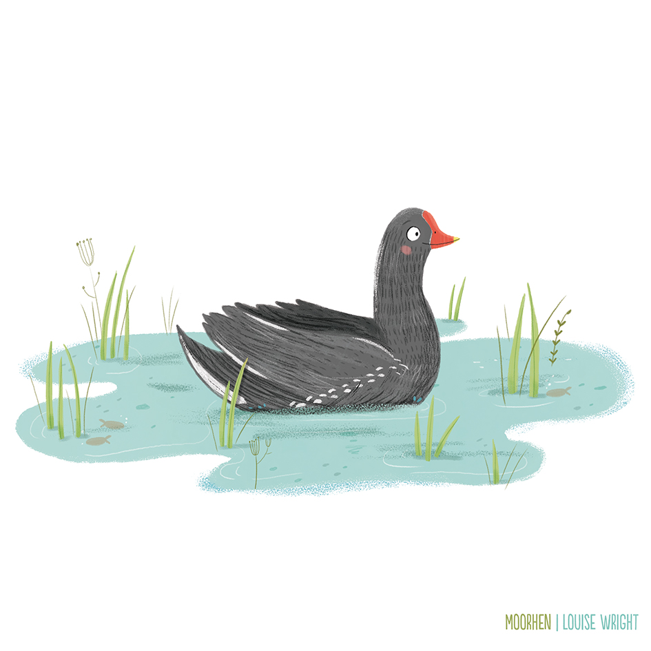 moorhen louise wright.jpg
