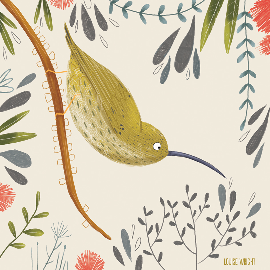 streaked spiderhunter louise wright.jpg