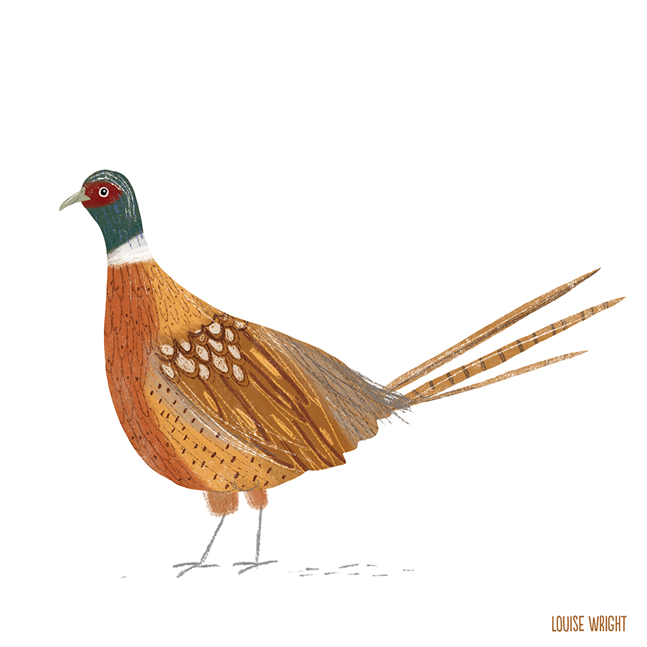 pheasent louise wright.jpg